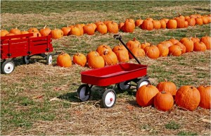 Learning is Fun at a Pumpkin Patch!