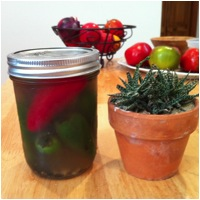 Pick a Peck of Pickled Peppers!